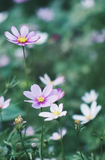 清新护眼的绿色植物手机壁纸