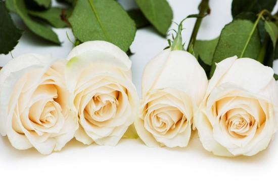 清新純凈的白色花卉桌面壁紙
