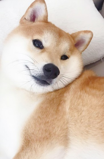 呆萌可爱小狗高清手机壁纸
