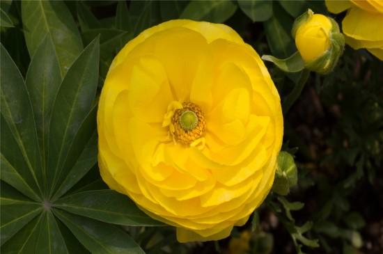 漂亮的黄色花朵高清桌面壁纸