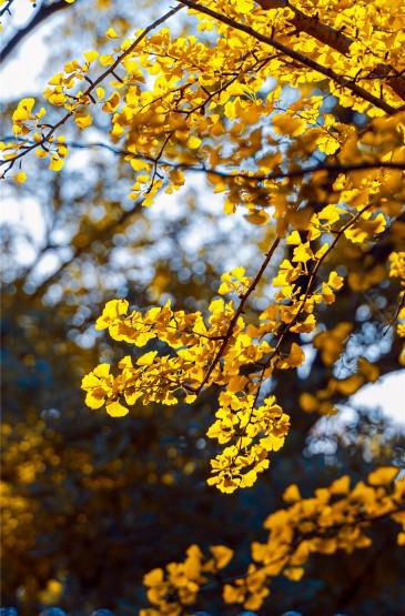 <秋天落叶风景手机壁纸