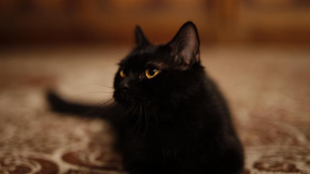 玄幻片《貓妖傳》