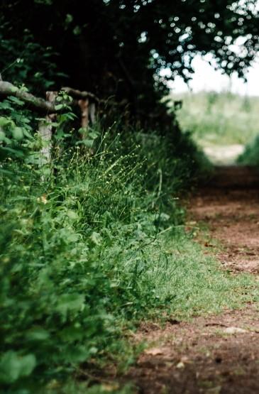 唯美森林風景圖片手機壁