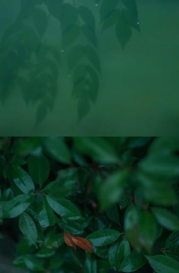 绿色小清新护眼植物高清手机壁纸