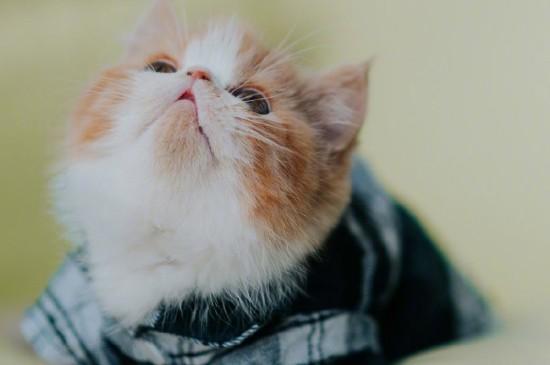 超可爱软萌的小猫咪电脑壁纸