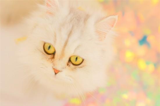 可爱小猫咪高清电脑桌面壁纸