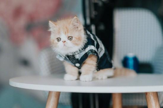 呆萌小猫可爱高清桌面壁纸