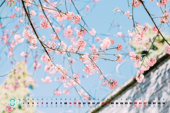 2020年1月小清新樱花图片桌面日历壁纸