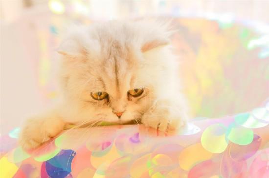 呆萌小猫咪高清桌面壁纸