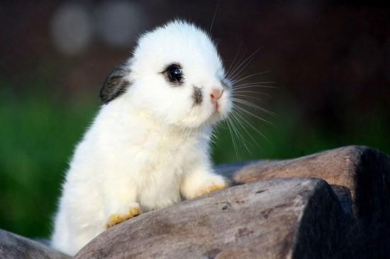呆萌可爱的兔子桌面壁纸