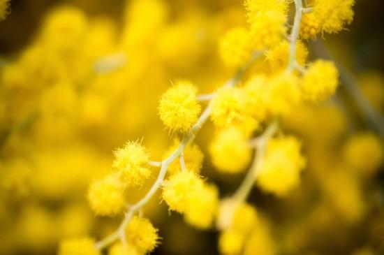 <唯美好看的花草植物圖片電腦壁紙