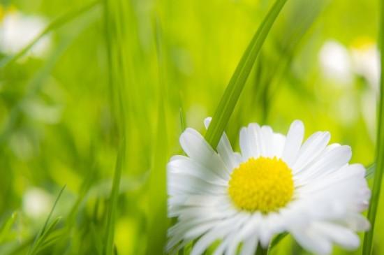 清新唯美的花卉圖片電腦壁紙