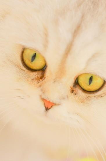 <可愛貓咪手機壁紙圖片