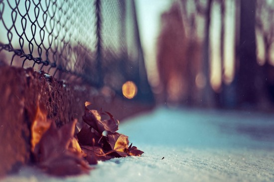 小清新養眼綠葉高清桌面壁紙