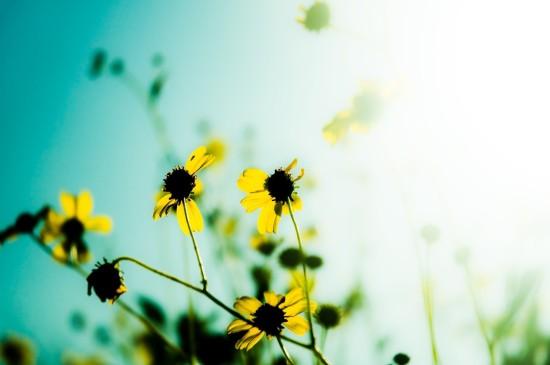 <朦朧唯美的花朵圖片桌面壁紙