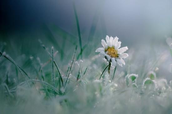<護眼冰凍植物高清桌面壁紙