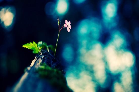 <唯美意境花卉圖片電腦壁紙