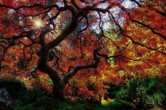 <靜謐森林秋天唯美風景圖片桌面壁紙