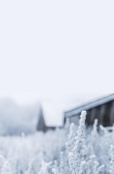 <唯美純白雪景圖片手機壁紙