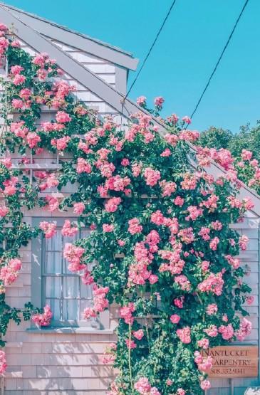 <花團錦簇唯美風景圖片手機壁紙