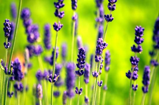 超美植物花卉攝影圖片電
