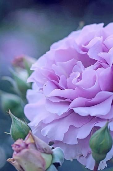 唯美植物花卉特写图片手机壁纸
