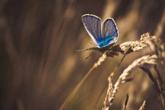 夢幻唯美的蝴蝶圖片桌面壁紙