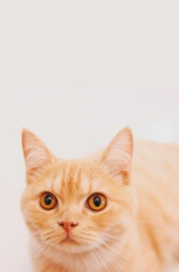 萌宠小猫咪可爱高清手机壁纸