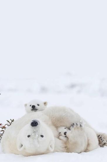 呆萌动物摄影高清手机壁纸