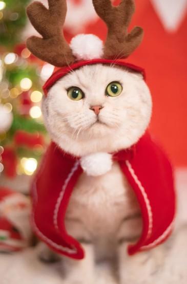 可爱喵星人圣诞节高清手机壁纸