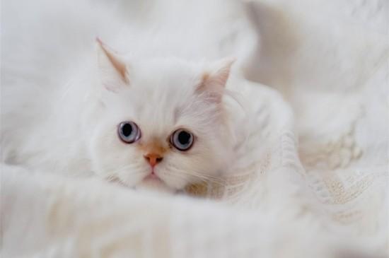 治愈系小貓可愛高清桌面壁紙