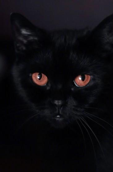 創意黑貓攝影高清手機壁紙