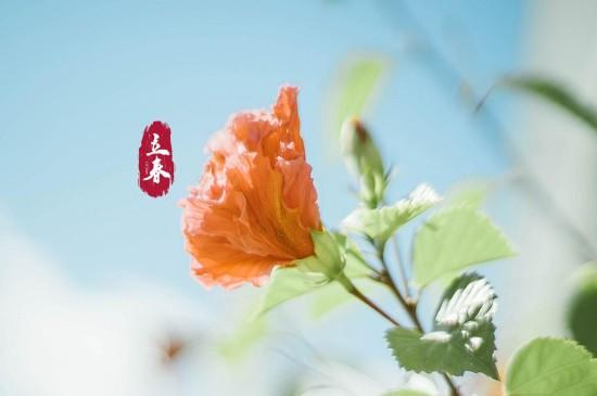 二十四节气立春高清桌面
