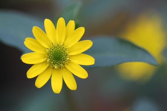 清新淡雅的小雏菊图片桌面壁纸