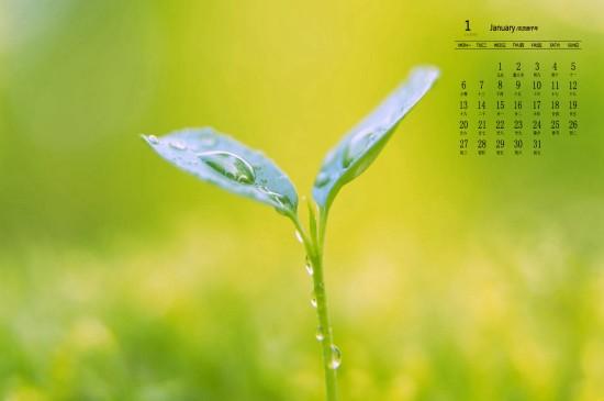 2020年1月清新養眼植物