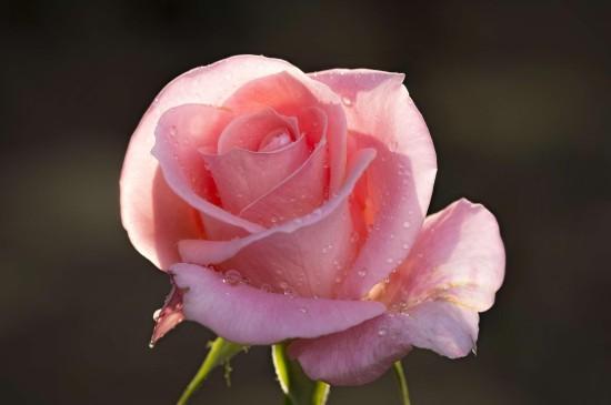 雨后花卉微距高清桌面壁纸