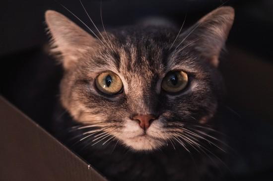 戶外小野貓圖片桌面壁紙
