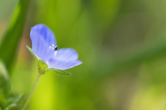 小清新唯美花卉图片高清壁纸