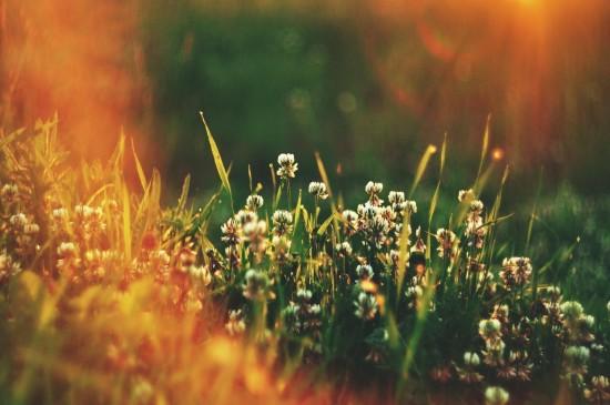 小清新唯美朦胧花卉桌面壁纸