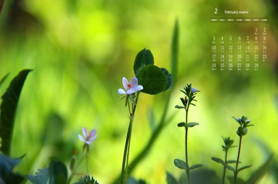 2020年2月清新养眼植物日历壁纸