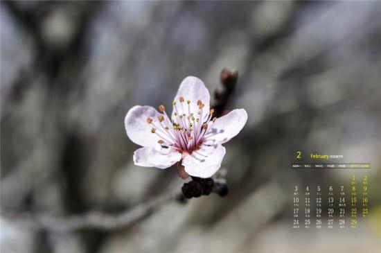2020年2月唯美浪漫樱花高清日历壁纸