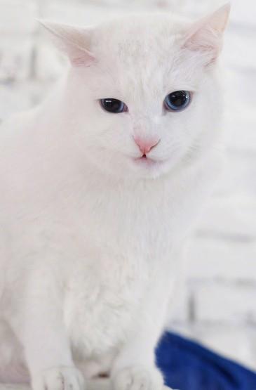 可愛萌寵小貓咪手機壁紙