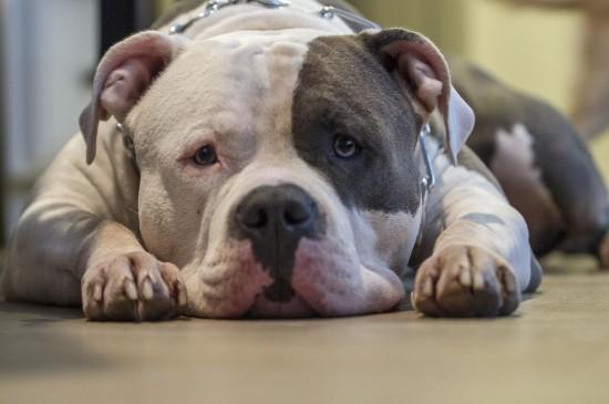 呆萌可愛狗狗圖片高清電腦壁紙