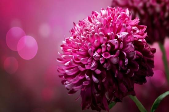 精选唯美小花图片高清壁纸