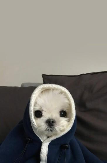 軟萌可愛的狗狗圖片手機