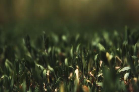 绿色护眼小草图片桌面壁纸