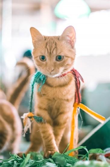 軟萌可愛的貓咪圖片手機