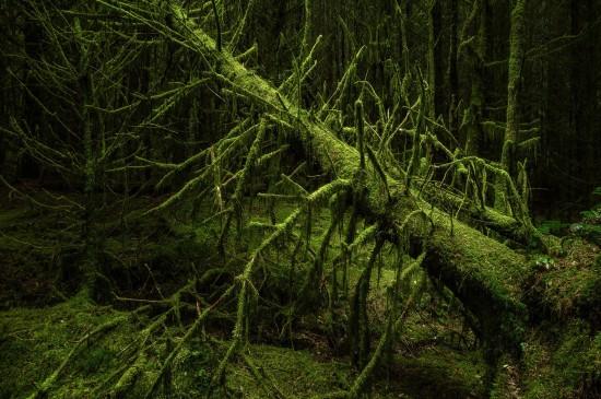 静谧森林树木高清图片桌面壁纸