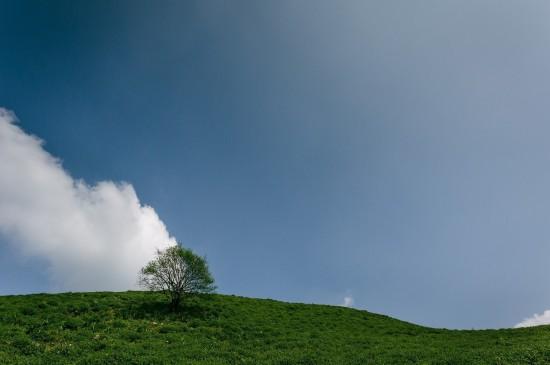 唯美大树自然风光图片桌面壁纸