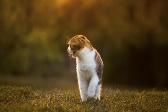調皮可愛的貓咪圖片桌面壁紙